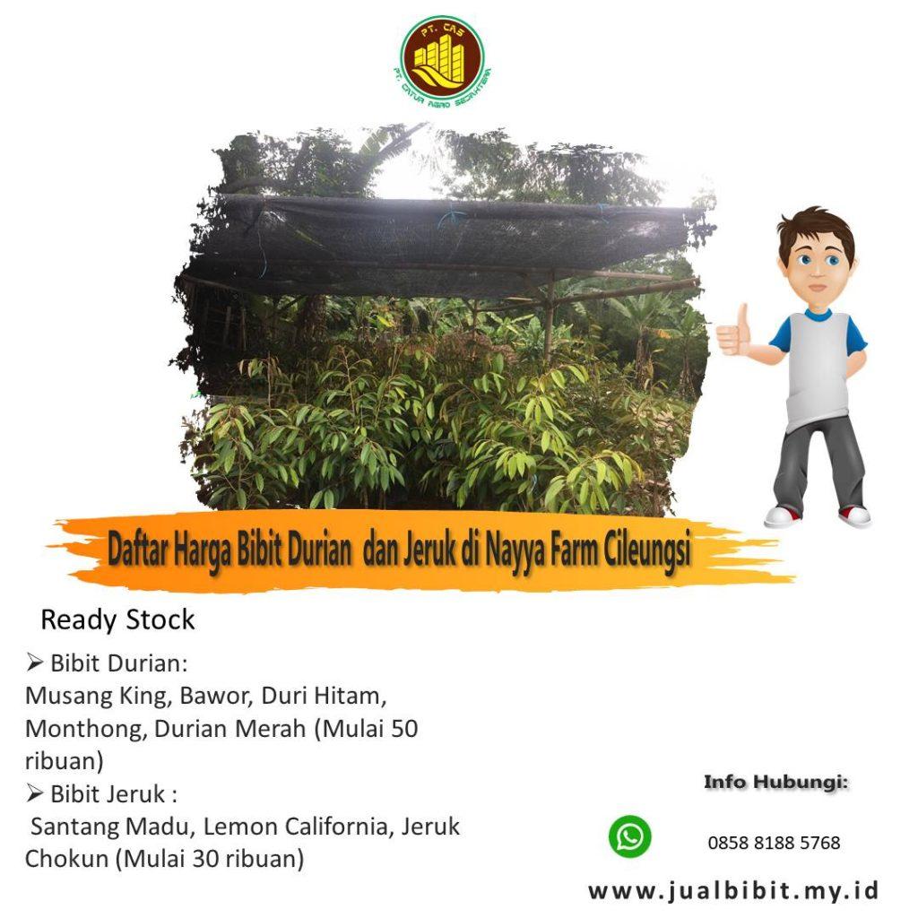 Jual Bibit Durian dan Bibit Jeruk