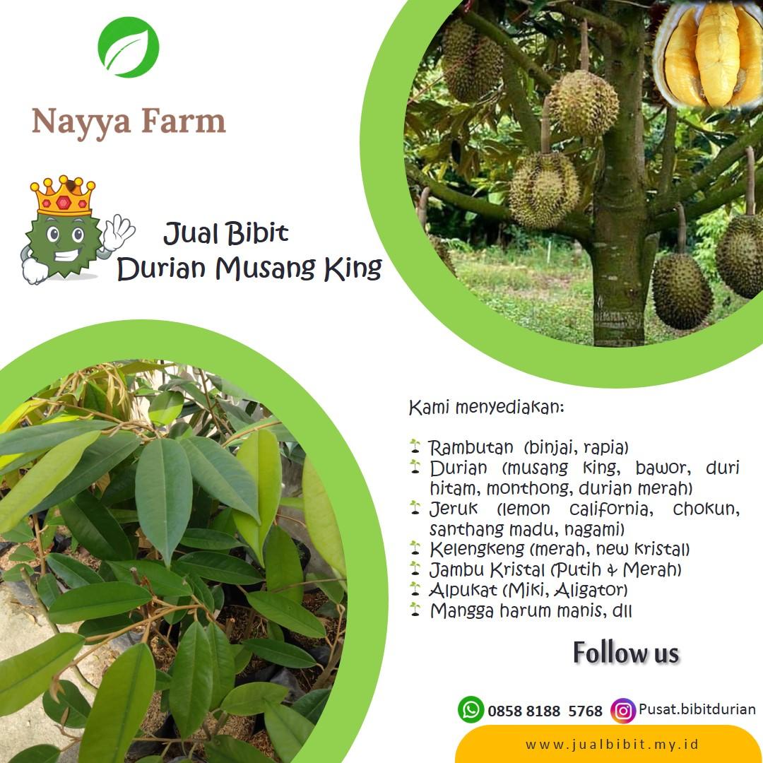 Jual Bibit Unggul Durian MusangKing di Nayya Farm Cileungsi