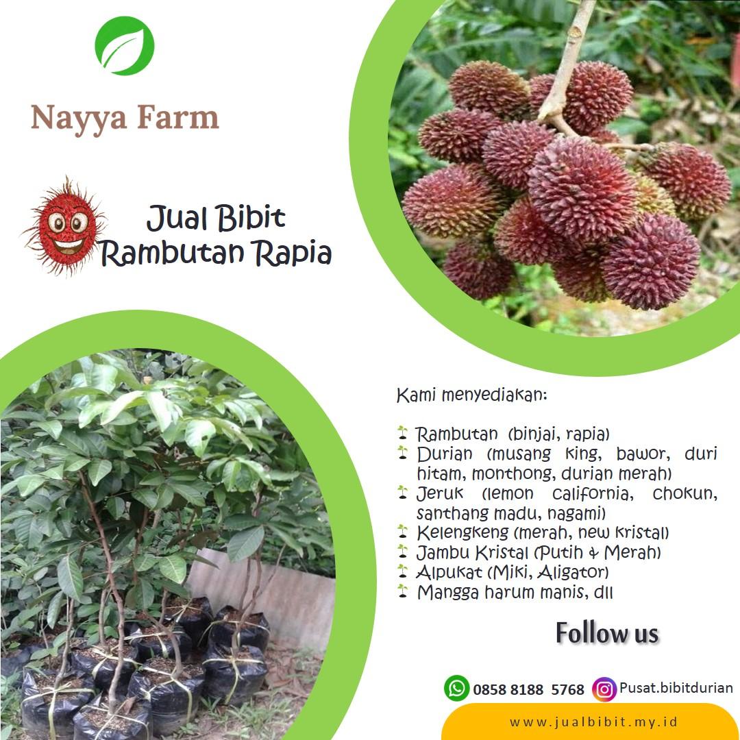 Tempat Jual Bibit Buah Durian, Jeruk, Kelengkeng, Alpukat, Mangga, Rambutan di Nayya Farm Cileungsi Bogor