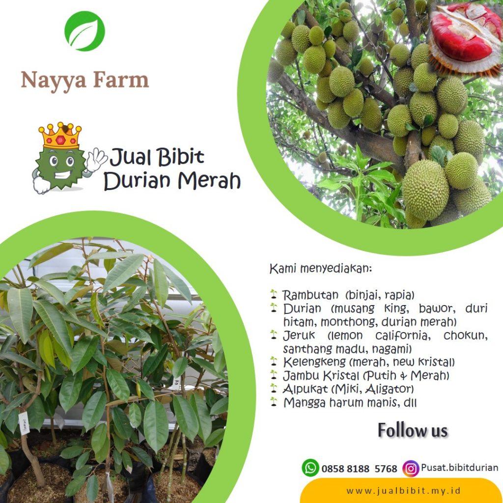 jual bibit durian merah di cileungsi bogor jakarta