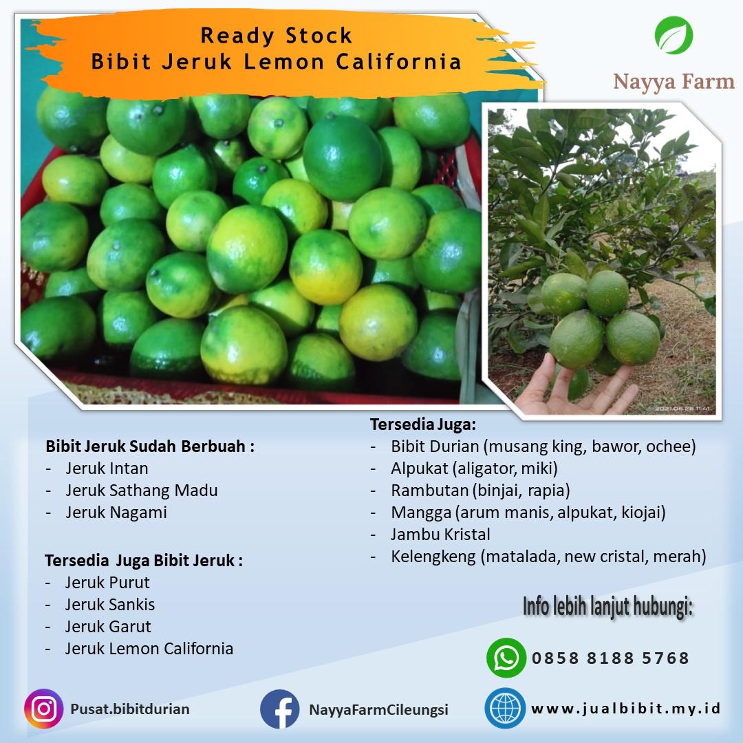 Manfaat Mengkonsumsi Jeruk Lemon