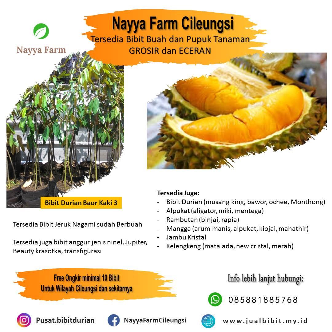 Tentang Durian Bawor – Jual Bibit Durian Bawor GROSIR dan Eceran di Nayya Farm Cileungsi