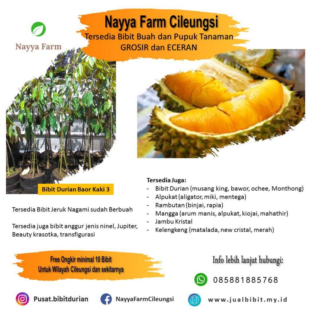 jual bibit Durian di Nayya Farm cileungsi Bogor