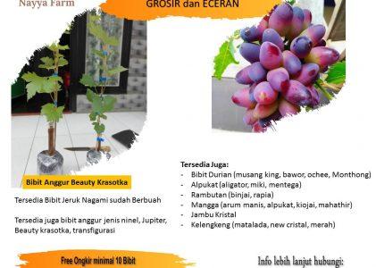 Faktor Penentu Keberhasilan Anggur