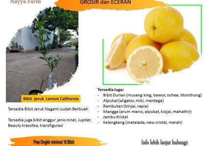 Manfaat Lemon California Untuk Kesehatan Tubuh – Jual Bibit Unggul di Nayya Farm Cileungsi Bogor